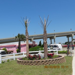 Jordan Blvd. immediatlly after planting palms and roses.