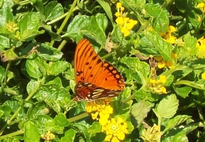 Sep Orange Butterfly Carol Keane