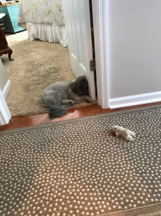 "Lulu worked hard too! According to Pat Schwaiger ""She walked in the house and sat down with her head against the door and fell instantly asleep! She might be the mascot, but she can't keep up with the workers!!!"""