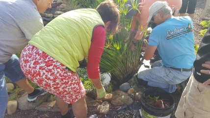 Becky Greene, Ros Stokes, and Tim Gibble remove overgrown plants from the waterfall.