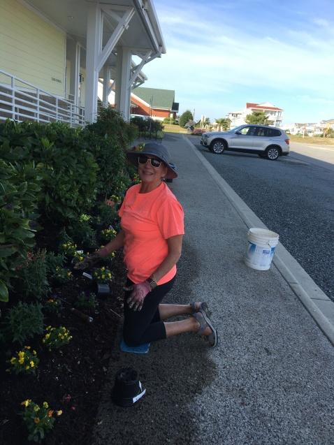 Susan Gibble plants violas.